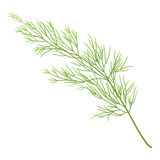 Dill. Sprig of dill isolated on white background Stock Images