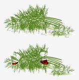 Dill vegetable character Stock Photos