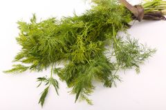 Dill vegetable. Fresh dill vegetable on white Royalty Free Stock Photos