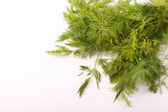 Dill vegetable. Fresh dill vegetable on white Royalty Free Stock Image