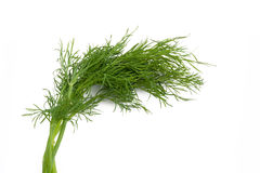 Dill on the white Stock Images