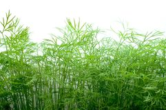Dill on white Stock Image