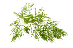 Dill. On a white background royalty free stock photos