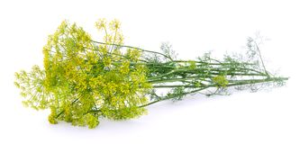 Dill on white. Branch of fresh green dill on white background royalty free stock photography