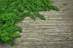 Dill on a wooden table Royalty Free Stock Image