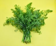 Dill on yellow background royalty free stock photos