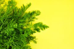 Dill on yellow background stock photos