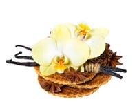 dillandear för vanilj för fröskidor för blommahonungorchid Royaltyfria Bilder