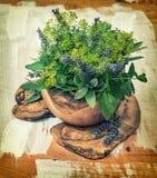 Dille, thyme, sDill, salie, lavendel, munt, basilicum Gezond voedsel H Stock Afbeelding