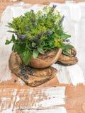 Dille, thyme, sDill, salie, lavendel, munt, basilicum Gezond voedsel H Royalty-vrije Stock Afbeelding