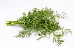 dilled Świeży koperkowy ziele odizolowywający na bielu rynek produktów rolnictwa świeże warzywa obrazy stock