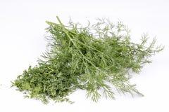 dilled Świeży koperkowy ziele odizolowywający na bielu rynek produktów rolnictwa świeże warzywa fotografia royalty free
