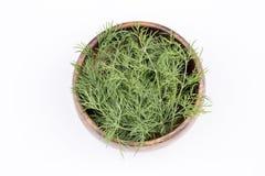 dilled Świeży koperkowy ziele odizolowywający na bielu rynek produktów rolnictwa świeże warzywa zdjęcia royalty free