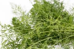 dilled Świeży koperkowy ziele odizolowywający na bielu rynek produktów rolnictwa świeże warzywa obrazy royalty free