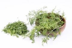 dilled Świeży koperkowy ziele odizolowywający na bielu rynek produktów rolnictwa świeże warzywa obraz royalty free