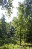 Dillertal, древесина Стоковое фото RF