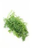 Dillkraut Stockfoto