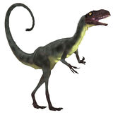 Dilong Dinosaur over White Royalty Free Stock Photo