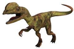 Dilophosaurus marchant sur le fond blanc Photo libre de droits