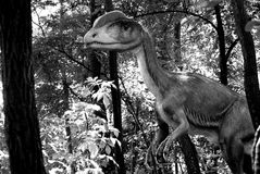 dilophosaurus wetherilli 免版税库存图片