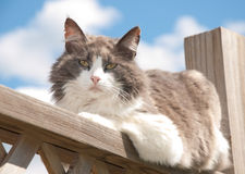 Diluted calico cat resting on porch railing Stock Image
