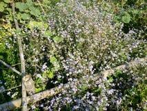 Dim flower stock images