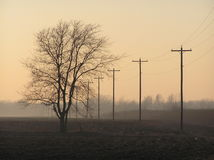 Dim light. Pic of tree and poles royalty free stock photography
