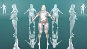 Dimagramento del corpo royalty illustrazione gratis