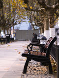 Dime in the park. In autumn disconsolate bise, the defoliation of ground, lonely bench Royalty Free Stock Photo