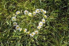 Dimensión de una variable del corazón de la manzanilla en la hierba Foto de archivo