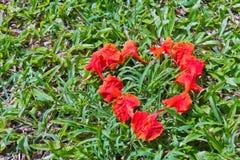 Dimensión de una variable del corazón de los pétalos de la flor de pavo real Foto de archivo libre de regalías