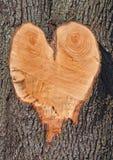 Dimensión de una variable del corazón en un árbol Imagen de archivo