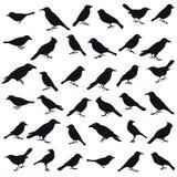 Dimensión de una variable del pájaro. stock de ilustración