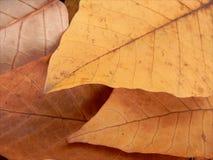 Dimensione caduta delle foglie Fotografia Stock Libera da Diritti