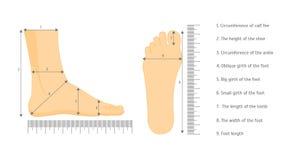 Dimensione della scarpa dei piedi umani di misura quadrata Vettore illustrazione vettoriale