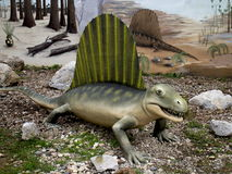 Dimetrodon dinosaur. Model of the dinosaur in its natural size Royalty Free Stock Photo