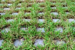 Diminishing perspective of turf stone pavers covered with green grass. Nature Background royalty free stock photography
