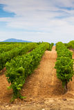 Diminishing rows of Vineyard Field in Southern France Stock Images