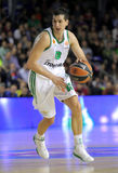 Dimitris Diamantidis of Panathinaikos Royalty Free Stock Photo