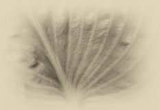 Dimly φύλλο στοκ φωτογραφίες