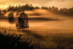 dimmaängmorgon över vatten arkivbilder