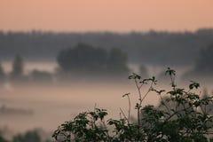 dimmaängmorgon över vatten Royaltyfri Bild