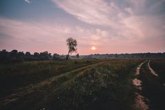 Dimma över landsvägen och ensamt träd utan sidor med solnedgången på bakgrund arkivfoto