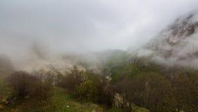 Dimma över skogen i bergen