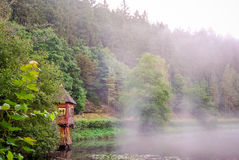 Dimma döljer träd i en skog Arkivbild