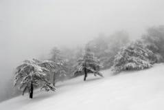 Dimma för Snowbergvinter Arkivfoton