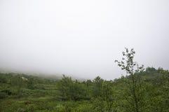 Dimma i berg Arkivfoton