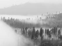 Dimma i den Yosemite dalen Royaltyfri Foto