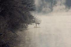 Dimma i floden Royaltyfri Foto