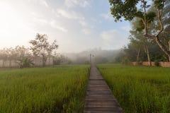 Dimma i morgonljuset Royaltyfri Fotografi